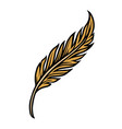 gold feather colorful concept vector image