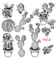 set of hand drawn cactuses for design vector image
