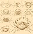 Set of 9 vintage engraved crabs vector image
