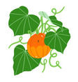 cute pumpkin character plant with fresh green vector image