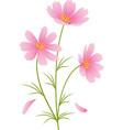 kosmeya flowers vector image vector image