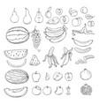 set sketch fruits vector image vector image