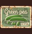 vegetables farm green pea rusty metal plate vector image vector image