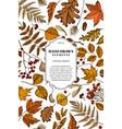 card design with colored rowan rowan acorn vector image vector image