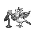 cartoon singing parrot sketch engraving vector image vector image