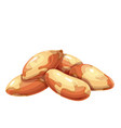 brazil nuts icon vector image