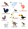 Cartoon colorful flat birds set vector image vector image
