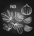 graphic fig fruits and leaves isolated on white vector image