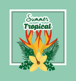 summer tropical season vector image vector image