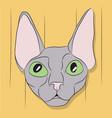 cat lies in the room vector image vector image