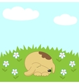 Dog sleeping on the meadow vector image vector image