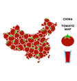 china map composition of tomato vector image vector image