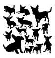 chiweenie dog animal silhouettes vector image vector image