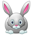 cute rabbit cartoon isolated on white background vector image vector image