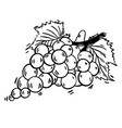hand drawn grape sketch black and white vector image