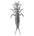 larva of galerita lecontei vintage vector image vector image