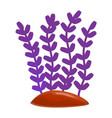 purple aquarium plant icon cartoon style vector image