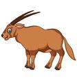 Cartoon Oryx Isolated On white Background vector image