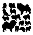 chow chow dog animal silhouettes vector image vector image