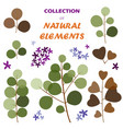 collection of natural elements vector image vector image