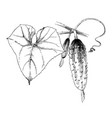 hand drawn cucumber branch vector image