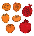 natural organic pomegranate and persimmons for vector image vector image