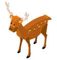 3d design for cute deer vector image vector image