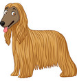 afghan hound dog vector image vector image