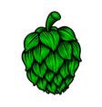 beer hop on white background design element vector image