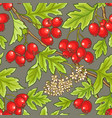 hawthorn pattern vector image