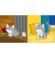 Homeless and domestic kitten vector image