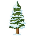 pine tree covered with snow vector image