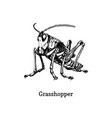 a grasshopper drawn insect vector image