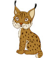 cartoon lynx sitting vector image vector image
