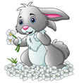 cartoon rabbit with white flowers background vector image