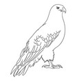 eagle line art 10 vector image vector image