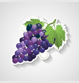 grapes sticker cartoon vector image