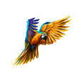 portrait blue-and-yellow macaw in flight from a vector image vector image