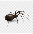 spider isolated on a transparent background vector image vector image