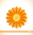 orange gerbera flower vector image
