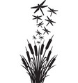 dragonfly and reeds design vector image