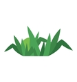 Grass isolated vector image