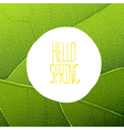 hello spring leaf texture vector image vector image