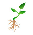 small plant soybean icon cartoon style vector image