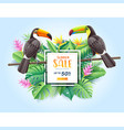 summer sale card with two toco toucans vector image