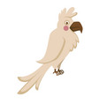 domestic albino parrot with big sharp beak and vector image vector image