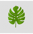 monstera branch isolated transparent background vector image
