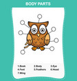 owl vocabulary part of body vector image vector image