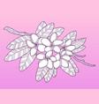 plumeria flowers fashion vector image vector image