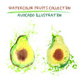set of watercolor avocado vector image